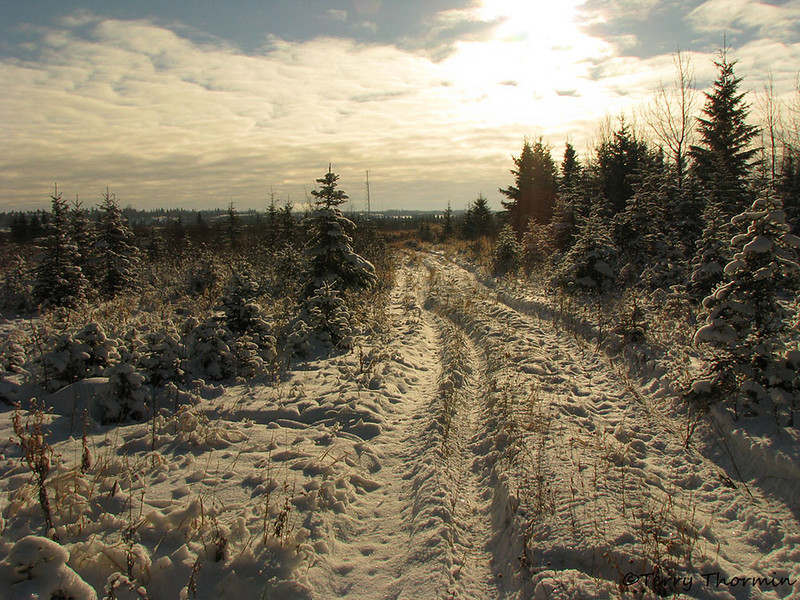 Snowy tracks St Albert, Alberta