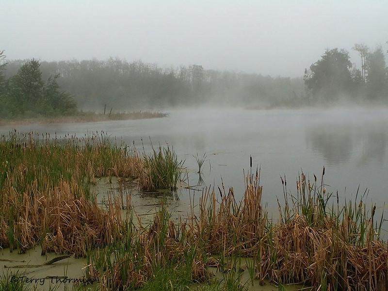 Marsh in Elk Island N.P., Alberta