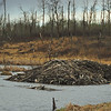 Beaver Lodge<br /> Elk Island National Park, Alberta
