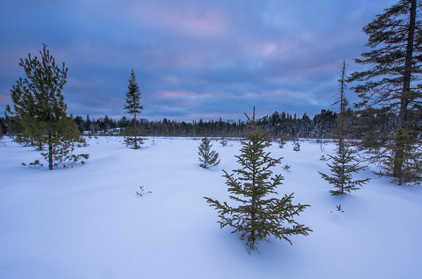 Algonquin Winter