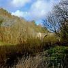 Allen Banks, near Hexham