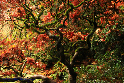 Kubota Gardens, Seattle, WA