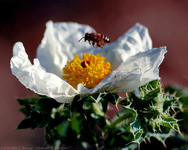 Portfolio Photo Macro Image