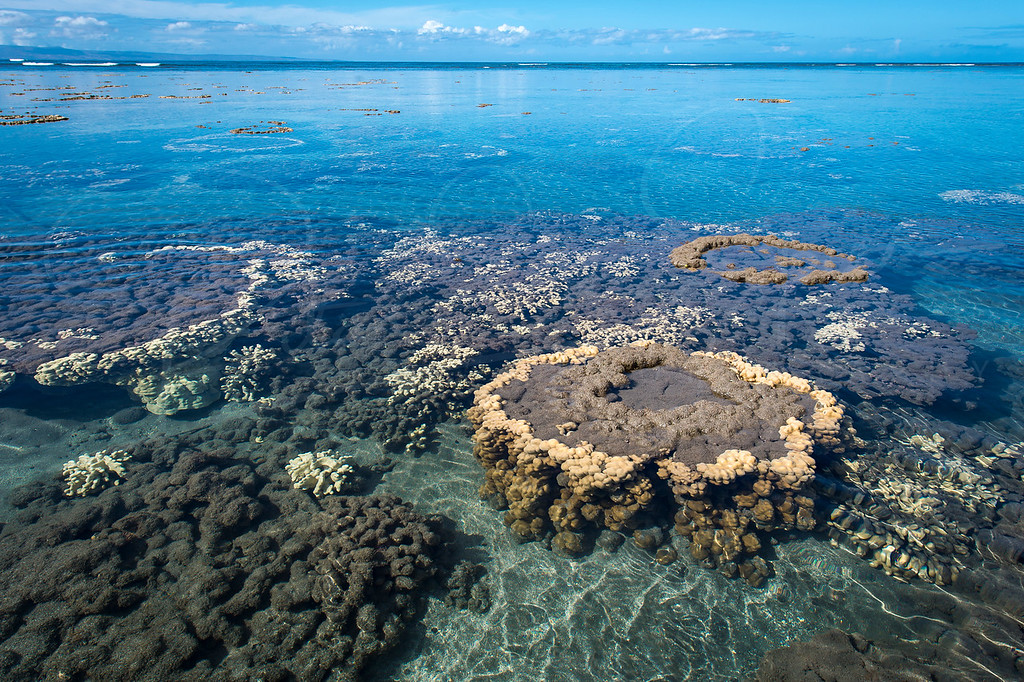 Coral Love