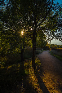 Path Lit by the Sun