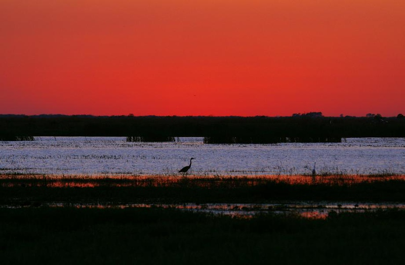 I was tired and ready to go home after a photo day that started well before dawn. When I saw the sunset start to go red, I hung around and was glad I did. Anahuac NWR, 4-18-2008
