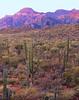 Saguaro and Sierra de la Giganta