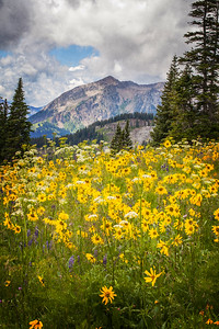 Wildflowers in Crested Butte, Colorado