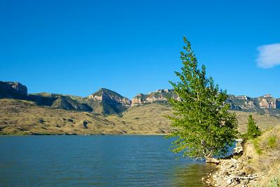 Tree Grows on Lake Edge
