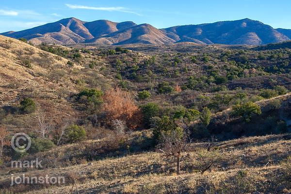 Catalina Mountains near Oracle, AZ, USA.