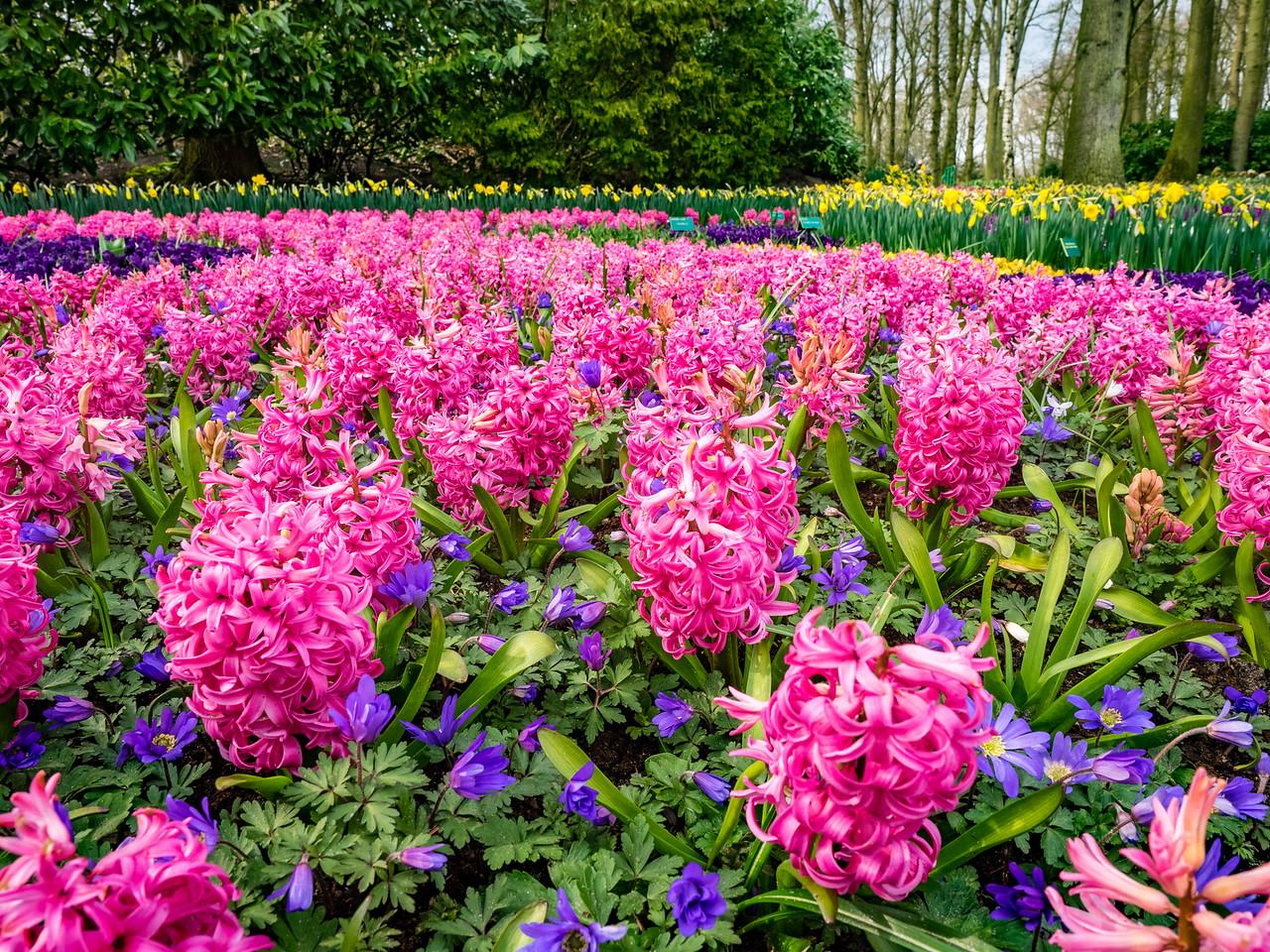 Amsterdam: Keukenof Gardens