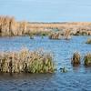 Shoveler Pond