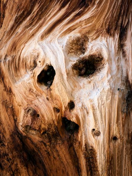The Spirit of the Ancient Bristlcone