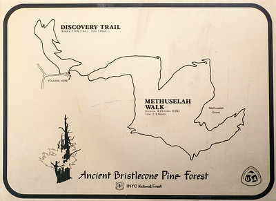 Ancient Bristlecone Pine Forest Sign