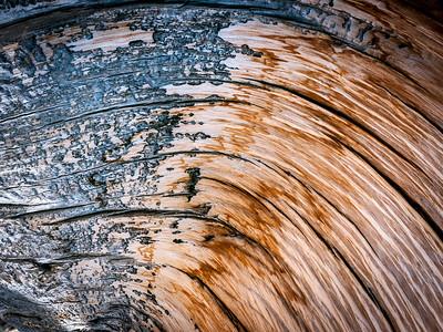 Bristlecone Pine 200
