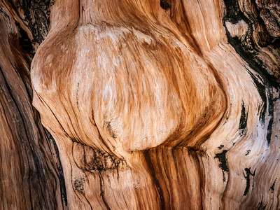 Bristlecone Pine 941