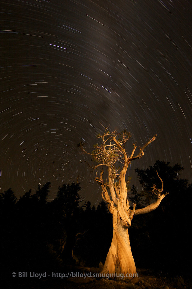 An Ancient Bristlecone in Schulman Grove and the Milky Way at night.  20 minute exposure with a little flood light assistance.