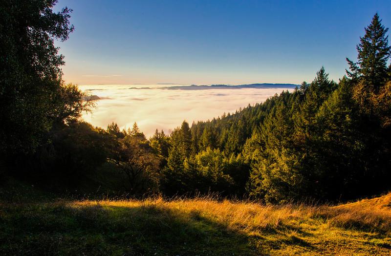 Blanket of fog helps water redwoods during dry summer months.
