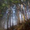 69  G Foggy Trail and Sun V