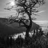 219  G Tree and Sun V