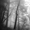 38  G Foggy Trail V