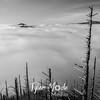 253  G Above Gorge Fog NW BW