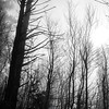 61  G Foggy Trail and Sun BW V