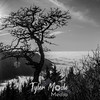 224  G Tree and Sun BW