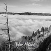 252  G Above Gorge Fog BW