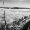 252  G Above Gorge Fog BW