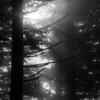 87  G Foggy Sun Rays BW V