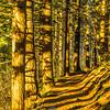 14  G Trail Sun Golden V