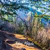 81  G Trail Sun