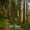 80  G Trail Through Forest