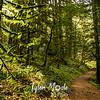 75  G Wahkeena Trail Moss