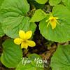 119  G Yellow Flowers