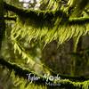 70  G Wahkeena Trail Moss