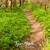 110  G Trail Through Forest