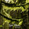 69  G Wahkeena Trail Moss