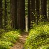 93  G Trail Through Forest V