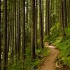 84  G Trail Through Forest V
