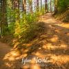 88  G Sun and Shadows on Trail