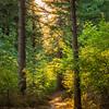 29  G Smoky Sunny Trail V