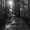 39  G Smoky Sunny Trail V BW