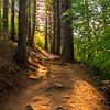 50  G Smoky Sunny Trail V