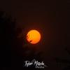 13  G Smoky Sunrise Sunspots