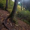 70  G Trail View Tree Sun V