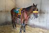 IMG_9079 horse
