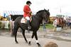 IMG_9084 horse