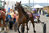 IMG_9086 horse race